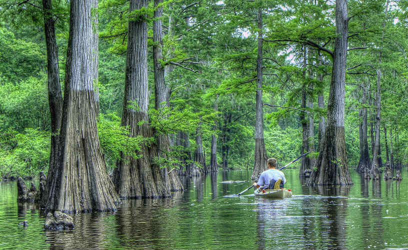 Kayaking through the cypress trees in Harrell Bayou