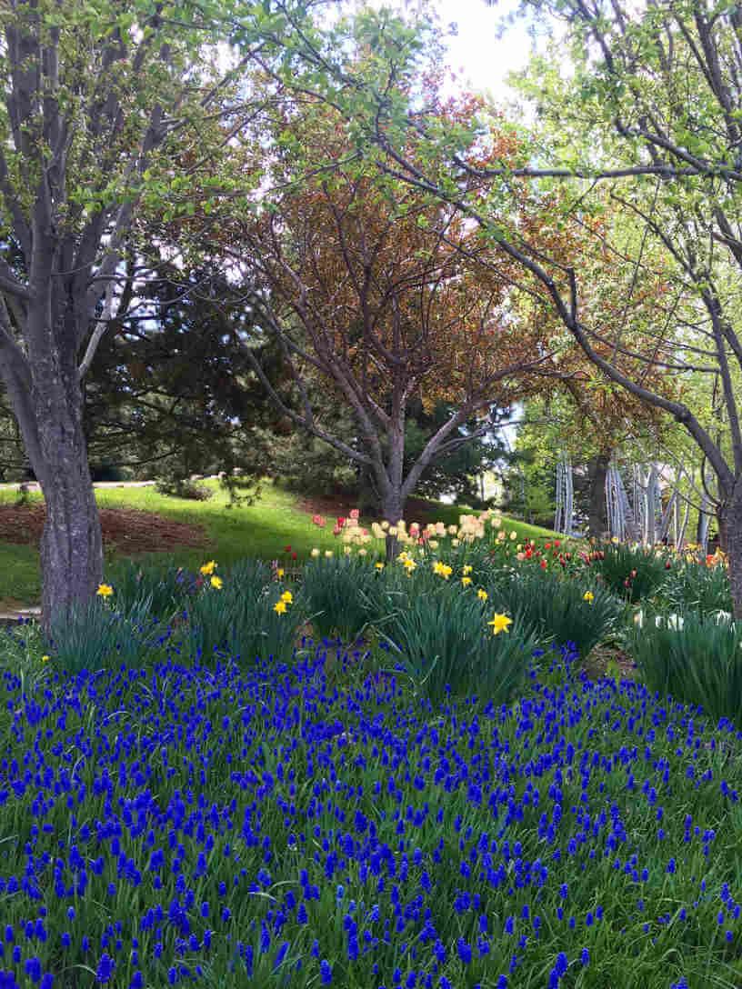 explore the beautiful botanic gardens