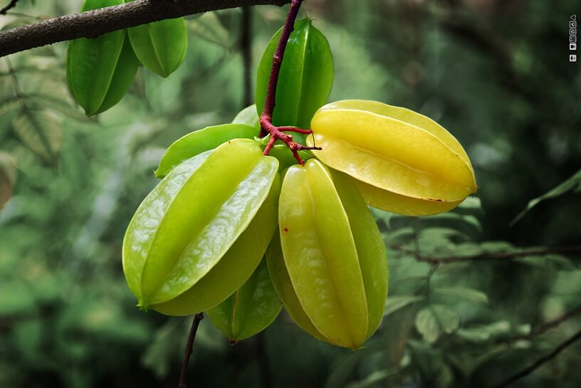 Photo of Starfruit