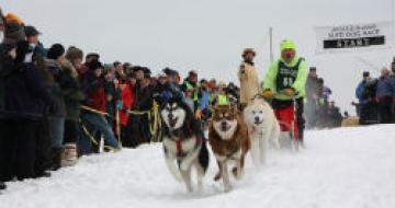Sled dog race in Bayfield