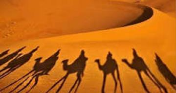 Thumbnail image of Shadow of camels in Moroccan desert