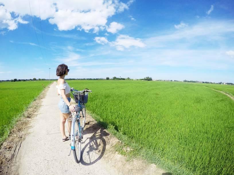 Hoi An rice fields